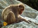 Πίθηκοι- Ο μαγικός κόσμος των ζώων