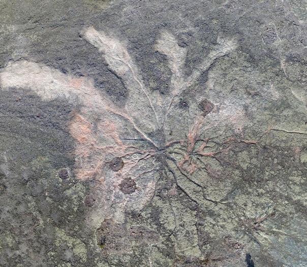 В Нью-Йорке найдены остатки самого древнего ископаемого леса на планете