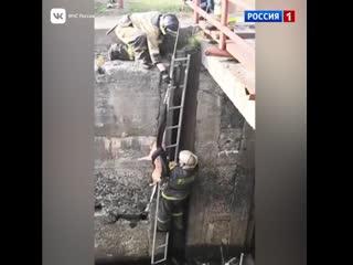 Пожарные спасли собаку из реки в Петрозаводске – Россия 1