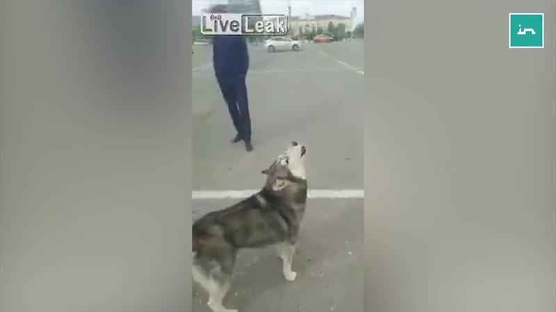 Dog Responds To Adhan (Islamic Call to Prayer)