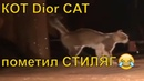 КОТ Dior в Марракеш | Dior CAT in Marrakech | кот на подиуме | Marrakech 2020