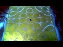 Калейдоскоп звуковых узоров (Киматика) - A kaleidoscope of sound patterns (Cymatics).