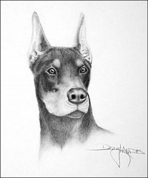 Дуг Лэндис - парализованный художник, рисующий ртом Потрясающе сильный духом художник Doug Landis (Дуг Лэндис) будучи парализованным пишет свои картины ртом, зажав карандаш между зубами.