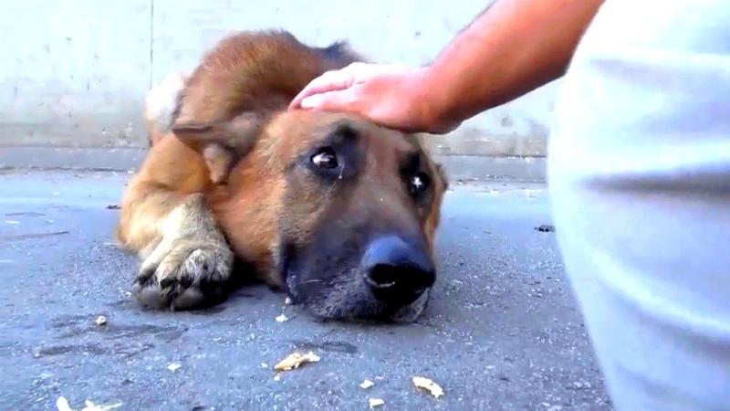 Он просто погладил собаку, бездомный пёс лег и заплакал…