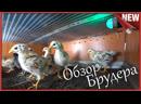 Брудер для цыплят Подробно размер обогрев и освещение самодельного брудера