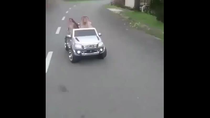Когда встречаешь на дорогах обезьян  .mp4