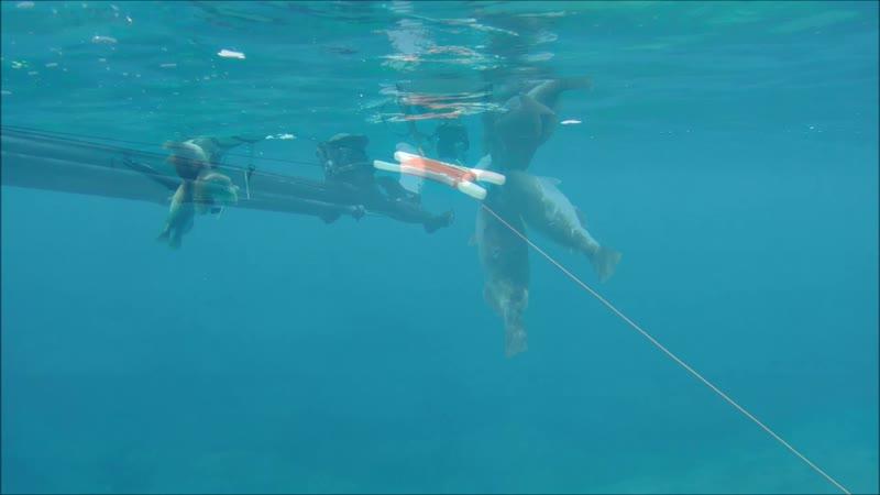 Подводная охота на Крите😉 дорога по южному берегу, р-он Хора Сфакион 18.04.19