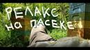Релакс на пасеке Прилетная доска Новости с пасеки