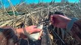 Не успеваю таскать! Весенний клёв карася. Рыбалка 2019. Столько рыбаков я не видел!!!