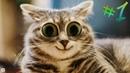 Приколы С Котами До Слез - Смешные Коты и Кошки 2019 Выпуск 1