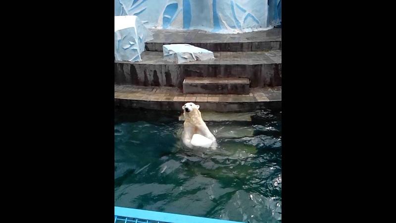 В Новосибирском зоопарке медведица удивила посетителей Браво Герда 28.06.16
