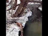 Утки, весна.. Video by knitting_yuliyadanilova