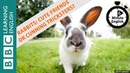 Rabbits: cuddly friends or cunning tricksters? Listen to 6 Minute English