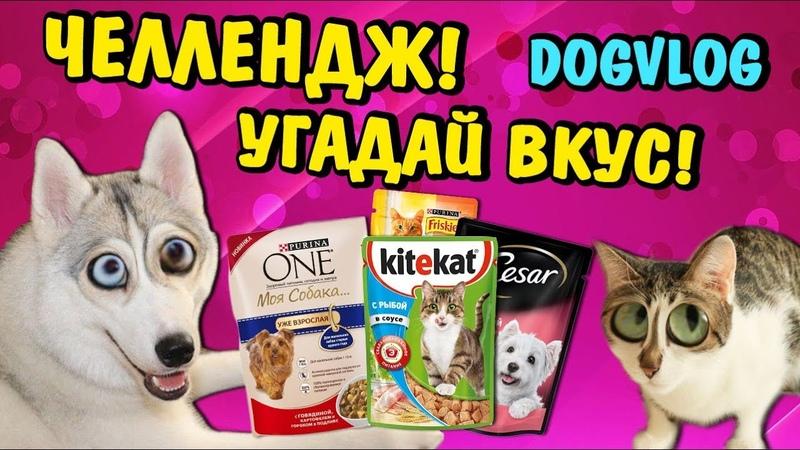 ЧЕЛЛЕНДЖ УГАДАЙ ВКУС КОРМА Говорящая собака Синди
