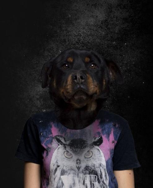 Болгарский фотограф Георгий Дюльгеров создает забавные и креативные фотоколлажи
