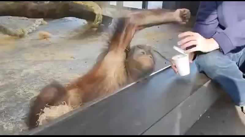 V смеется с фокуса в зоопарке Прикол
