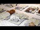 유치원에서 단체 낮잠자는 개린이들ㅋㅋㅋㅋ(박보검도 다님) l Puppies Enjoy Nap Time In The Kindergarten LOL