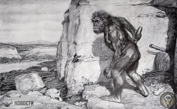 Таинственное племя полулюдей-полуживотных в Южной Америке Сотни лет малоисследованные джунгли Южной Америки являлись источником историй о странных существах, в том числе о крупных