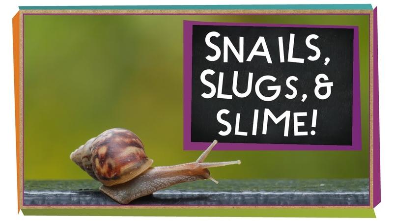 Snails, Slugs, and Slime!   Animal Science for Kids