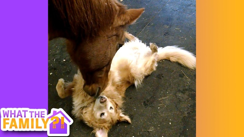Best Pets EVER! | These Funny Animals Will Brighten Your Day!