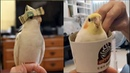 Funny Parrots Videos Compilation cute moment of the animals Cutest Parrots in the world