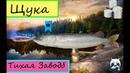 Русская рыбалка 4 Куори Щука