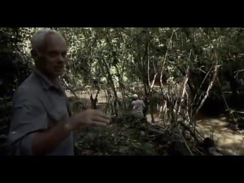Речные монстры 3 Сезон 7 Серия Убийца из джунглей Jungle Killer