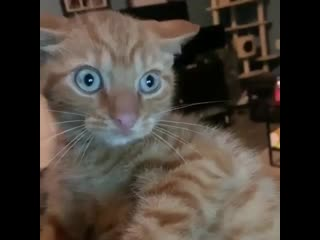 Кот и the sims