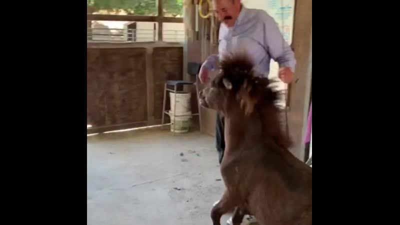 Дэвид Личман и пони
