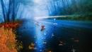 Дождь осень футаж фон скачать бесплатно footage hd background