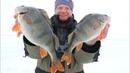 ОНИ НЕ ЛЕЗУТ В ЛУНКУ И ЛОМАЮТ МОРМЫШКИ Ловля окуня по последнему льду.