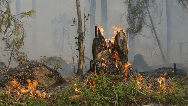 Лесной пожар в Марий Эл уничтожил 2,5 гектара сосняка