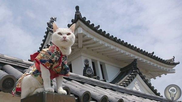 НЕОБЫЧНЫЙ КОШАЧИЙ ХРАМ В ЯПОНИИ В Японии очень любят кошек. Настолько, что в городе Киото существует кошачий храм Святыня мяу-мяу. Монахи в нем - тоже коты во главе с кошечкой Коюки. Ей