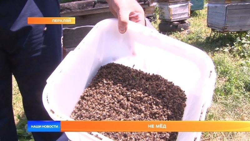 Не мёд: в Мордовии массово гибнут пчёлы