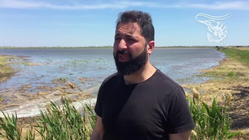 Масштабы и условия для выращивания креветки в Крыму