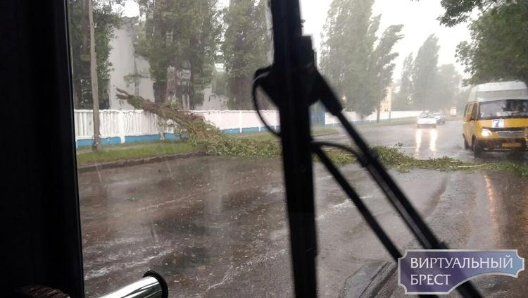 Красногвардейскую подтопило, так ещё и дерево рухнуло на проезжую часть