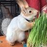 Белка Соня on Instagram Пророщеный овёс🌱 Моя избалованная Сонька любит кушать травку только в день покупки На следующий день она её уже не интер