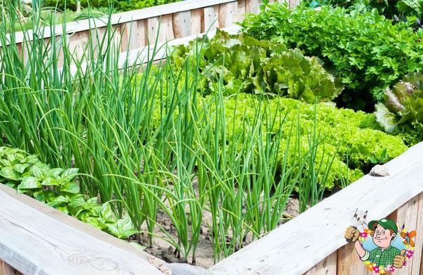 Культуры, которые я сажаю в июле, чтобы получить больше урожая