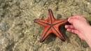Острова Филиппин. Starfish island в заливе Хонда