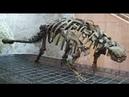 История вымерших животных(анкилозавр)