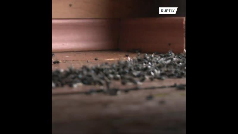Миллион, миллион мясных мух: жители Свердловской области страдают от нашествия насекомых