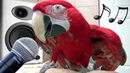 Funny Parrots Sing Dance Mimic Baby Cat Dog - Birds Imitate Phone Cats Meowing - Funny Birds Video