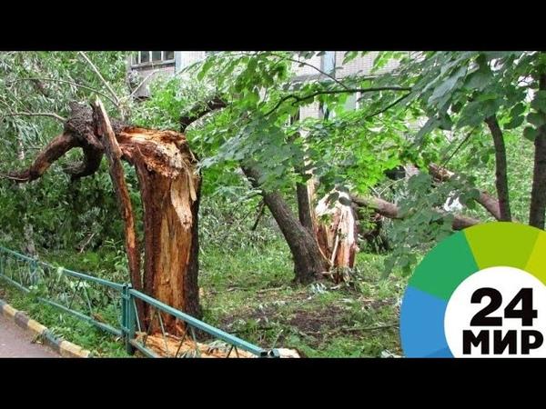 Ураган в Поволжье обесточил дома и повалил деревья - МИР 24