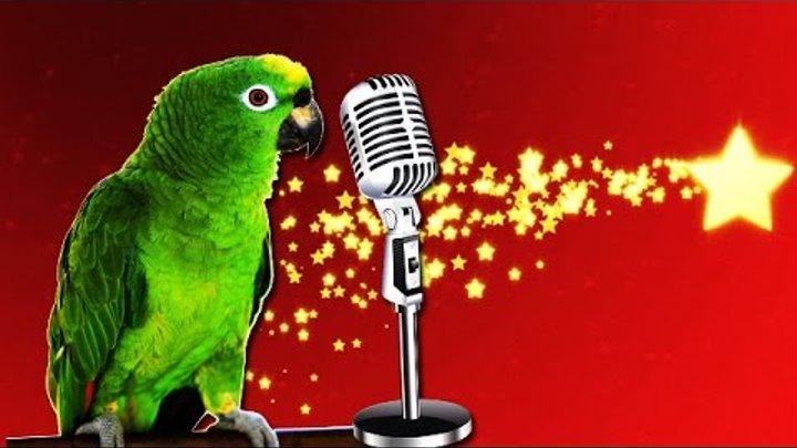Попугаи поют песни! Parrots sing!