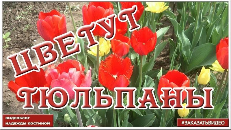 Видеофон Тюльпаны ✿ Прекрасная музыка пение птиц и красивые цветы