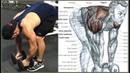 12 EXERCISES TO TRAIN THE REAR SHOULDER 12 EJERCICIOS PARA ENTRENAR HOMBROS DELTOIDES POSTERIOR