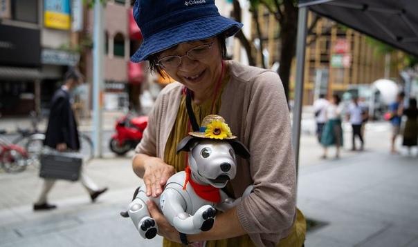 В Японии набирают популярность вечеринки для роботов-собак Aibo Каждое воскресенье токийское кафе Penguin открывается на час раньше по не совсем обычной причине: здесь собираются владельцы