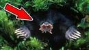 TOP 10 Nejpodivnější zvířata na světě