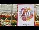 Dutch Lily Days 2018 @ Onings Holland Flowerbulbs