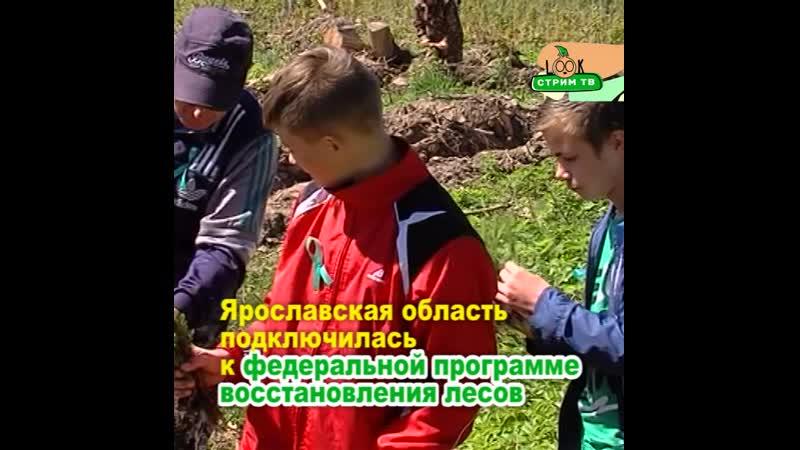 В Ярославле высаживают новые деревья